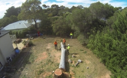 Tree Arborist Service Removal & Pruning In Langwarrin South
