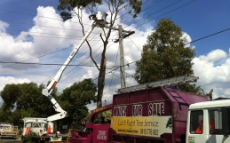 Tree Removal And Tree Service In Mt Eliza