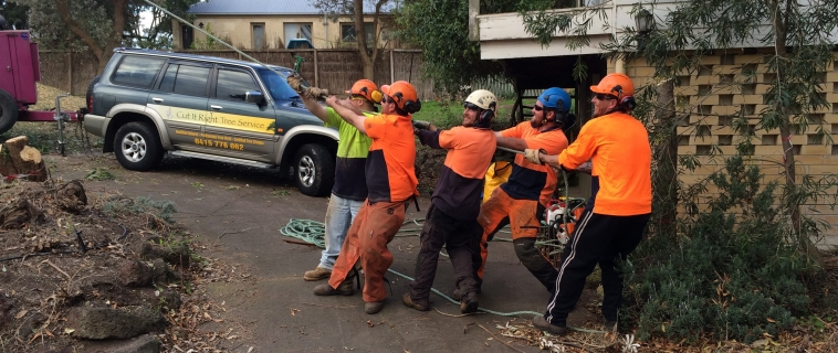 Do You need a Tree Removal In Mount Eliza