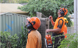 Tree Lopping In Red Hill, Removal, Pruning, Stumping Services