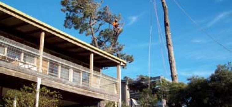 Tree Removal Mornington Peninsula